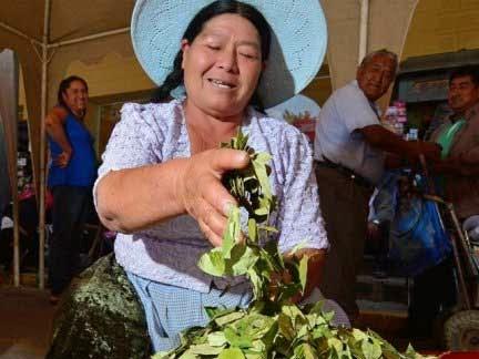 Bolivia tendrá una nueva ley antidroga y aumentará los cultivos de coca