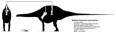 Rebbachisaurus bones