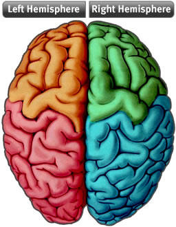 Brain Hemispheres7