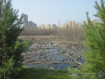 Болото рядом с Дворецом водных видов спорта Казани