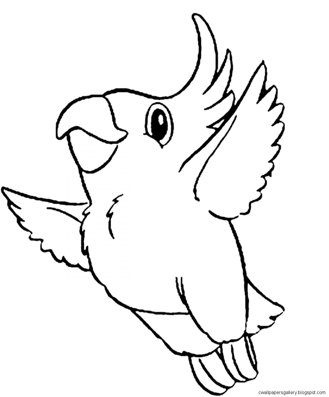 Cute bird drawing wallpapers gallery for Cockatiel coloring pages