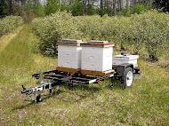 Transportable Beeyard