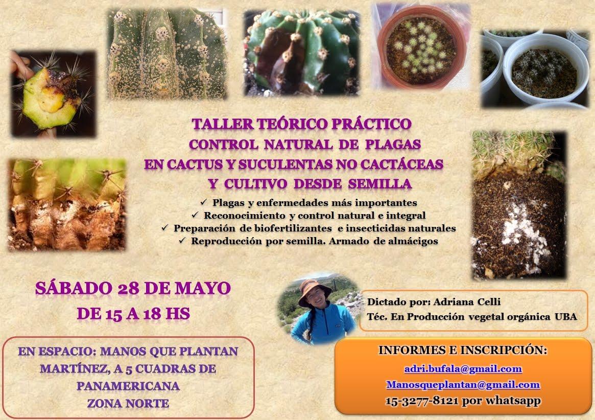 SÁBADO 28 DE MAYO EN MARTÍNEZ: Control orgánico de plagas en cactus y suculentas nc