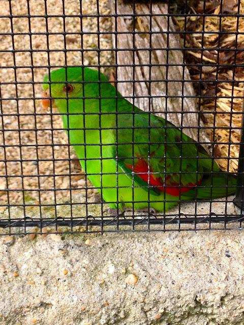 dunedin botanical garden parrots