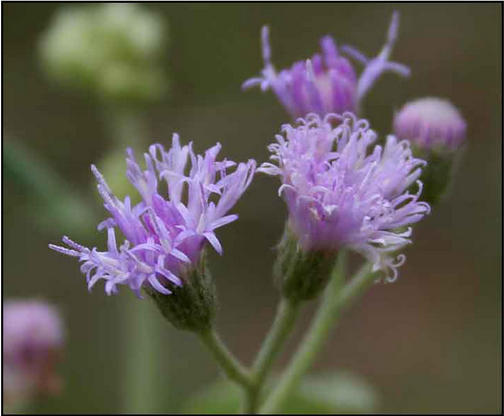 Miraculous Plant Uses in Daily Routine