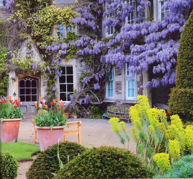 Arte y jardiner a plantas trepadoras en el jardin for Glicina planta
