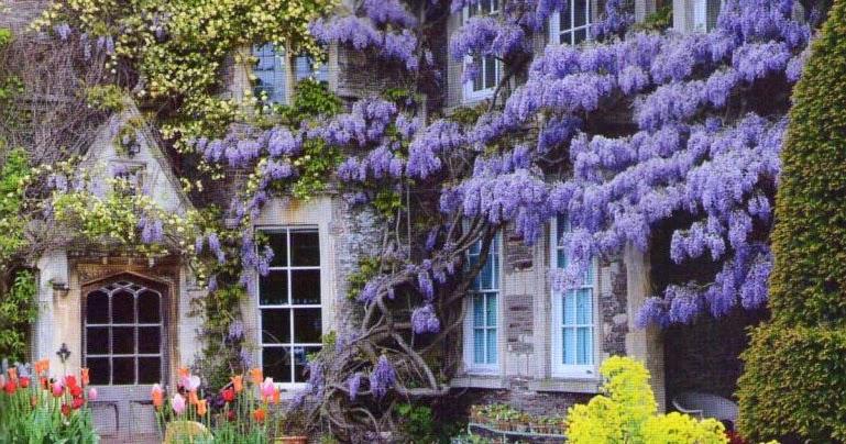 Arte y jardiner a dise o de jardines plantas trepadoras for Plantas trepadoras de jardin