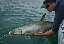 Manipulación de peces en captura y suelta