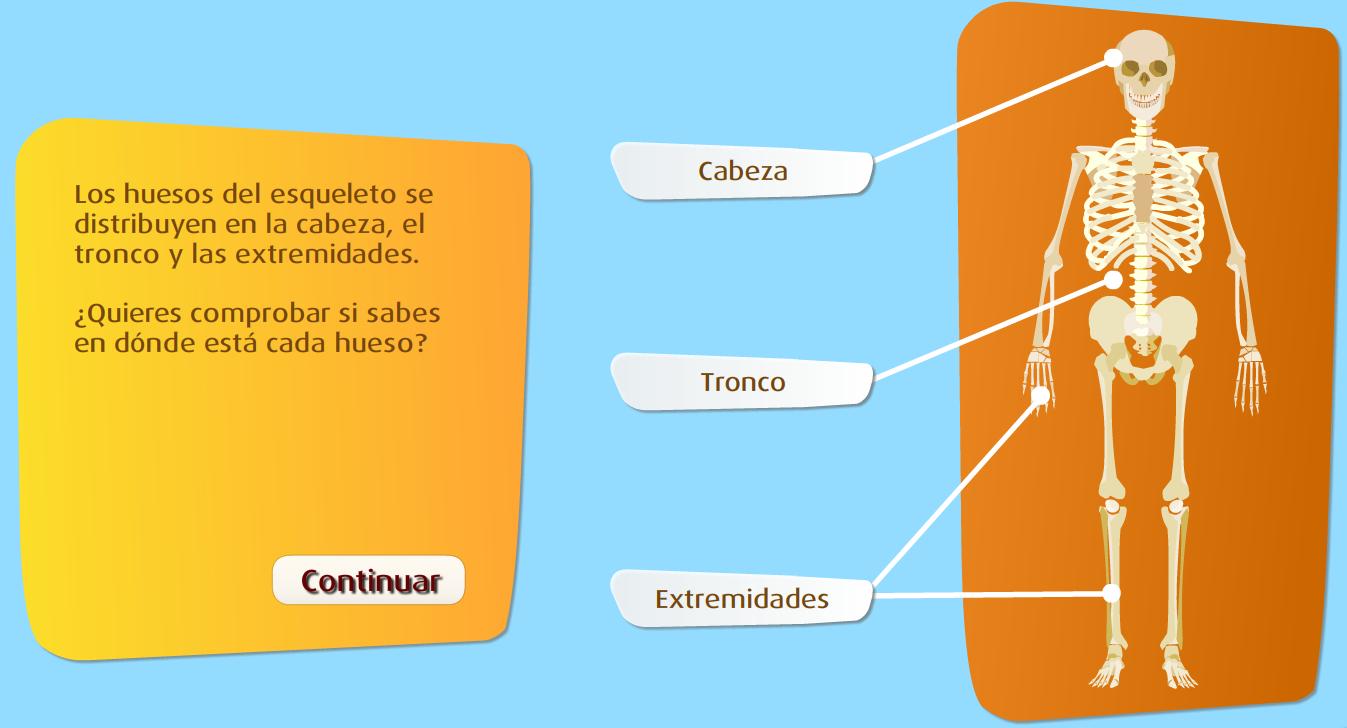 http://www.primerodecarlos.com/TERCERO_PRIMARIA/octubre/Unidad2/actividades/cono/esqueleto_sm/frame_prim.swf