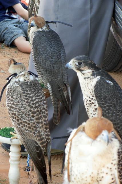 Falcons-Riyadh