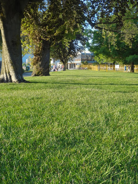 green grass in vancouver