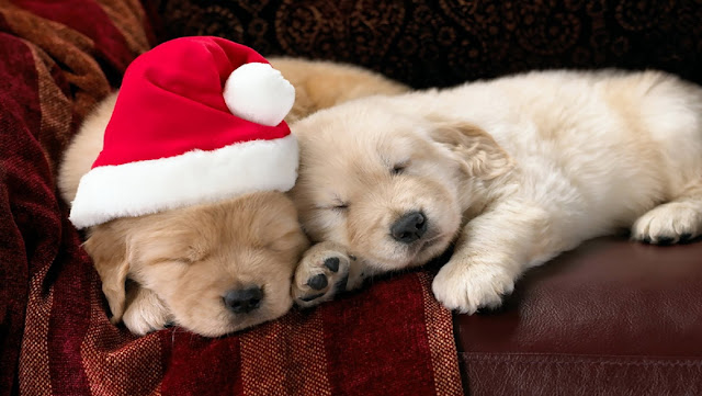 Free Christmas Puppy Dog HD Wallpapers for iPhone 5