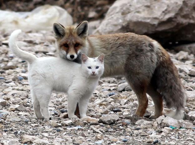 [Imagen: gato-y-zorro-amigos.jpg]