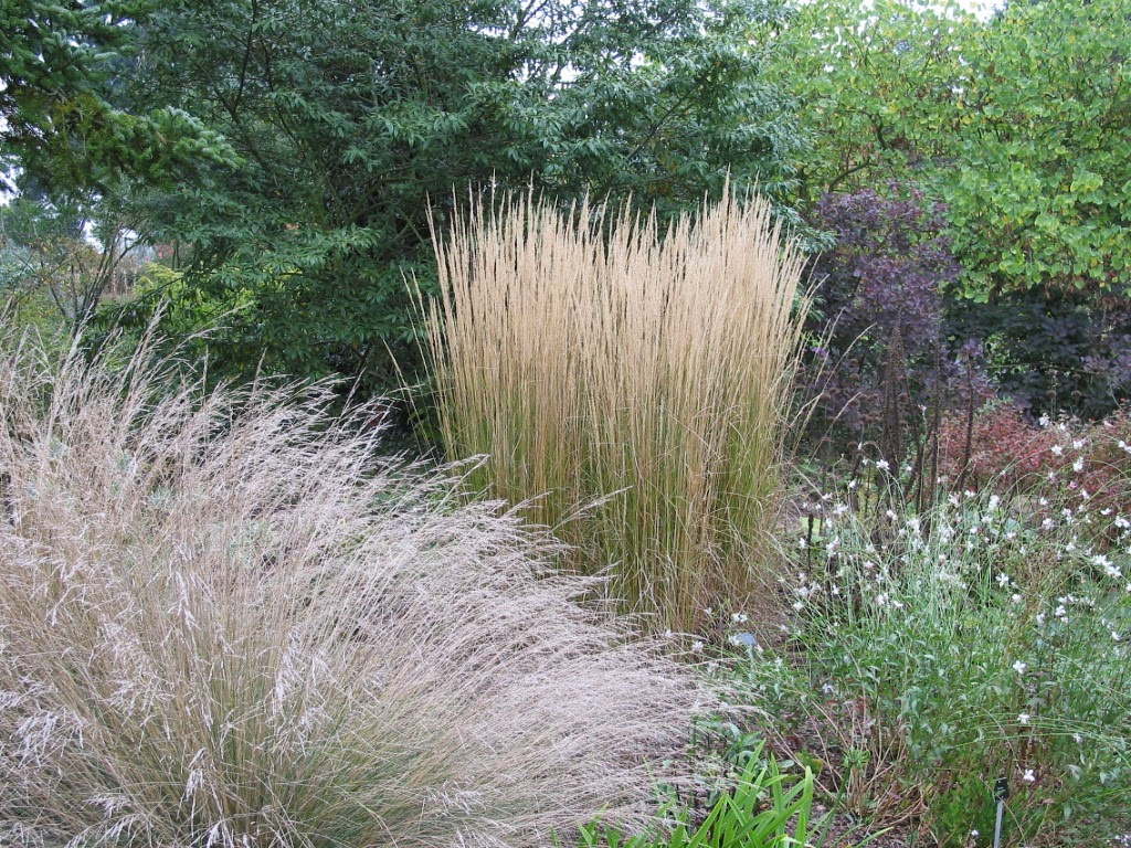 Noel 39 s garden blog grasses update on facts and fears for Different ornamental grasses