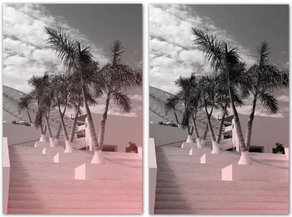tinted palm trees on stairs