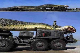 PHOTONEWS: The Amazing Giant Snake Killed In Egypt Red Sea