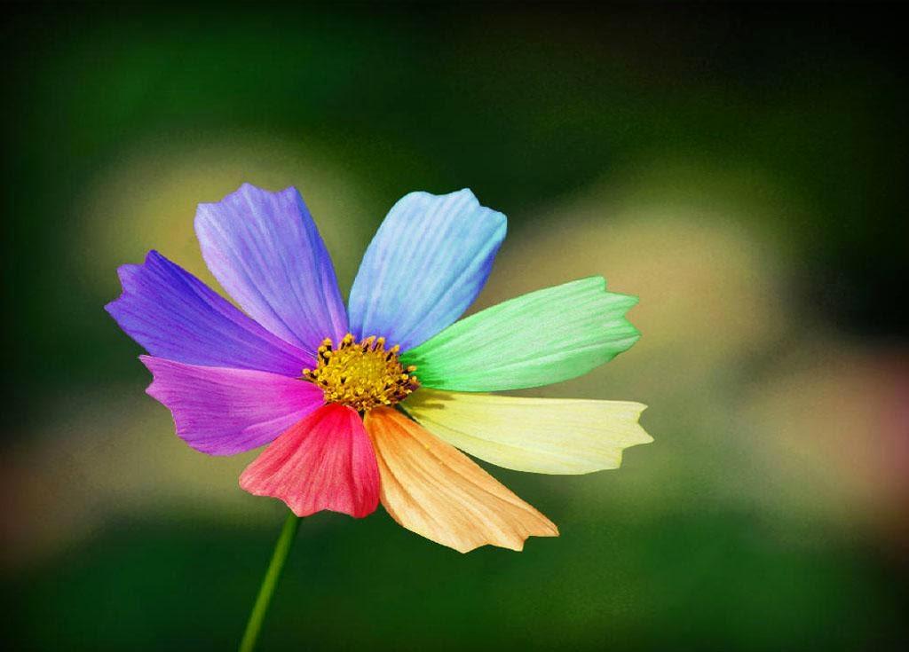 rainbow flower background - photo #3