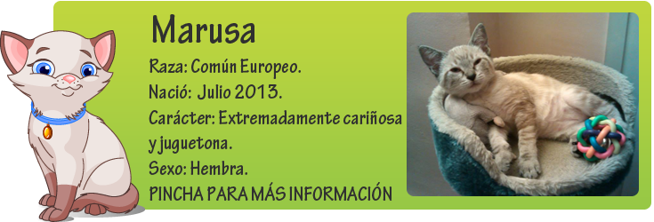 http://mirada-animal-toledo.blogspot.com.es/2013/10/marusa-abandonada-en-un-contenedor-de.html