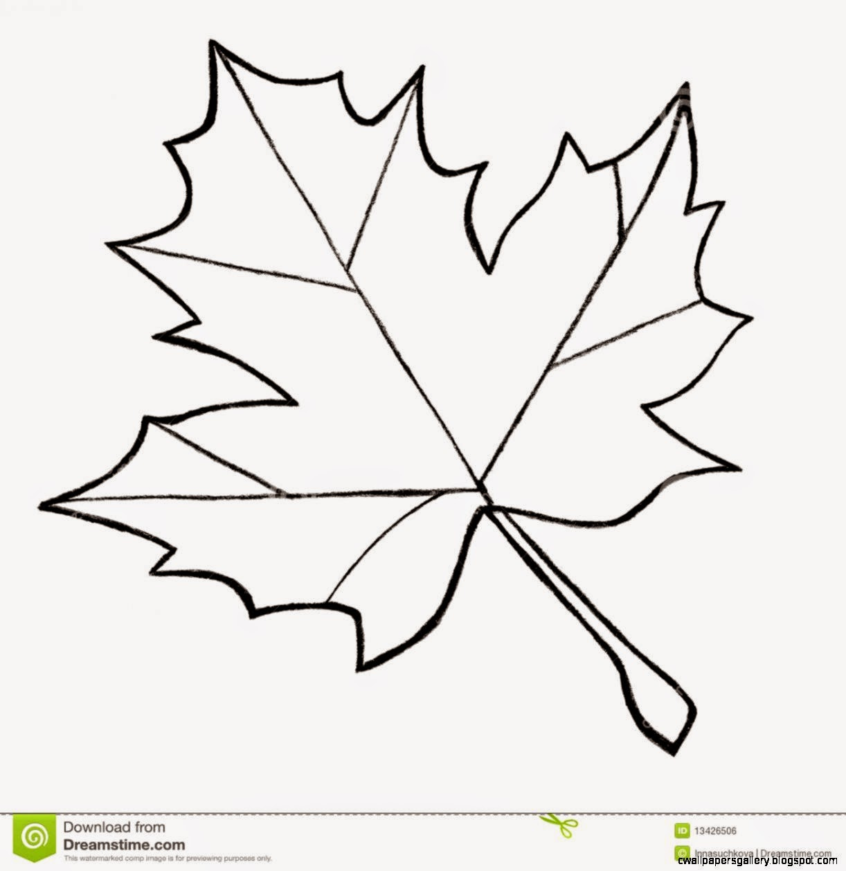 Maple Leaf Sketch Stock Photos – 451 Maple Leaf Sketch Stock