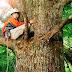 戀上春樹/哪啊哪啊神去村(Wood Job!)觀後感:輕鬆惹笑的山林故事