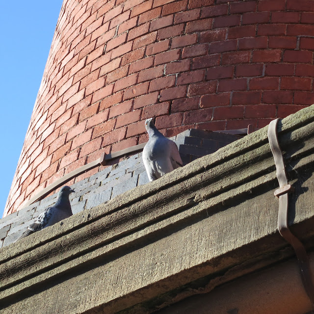 Pigeon on red brick chimney turns its head to an odd angle.