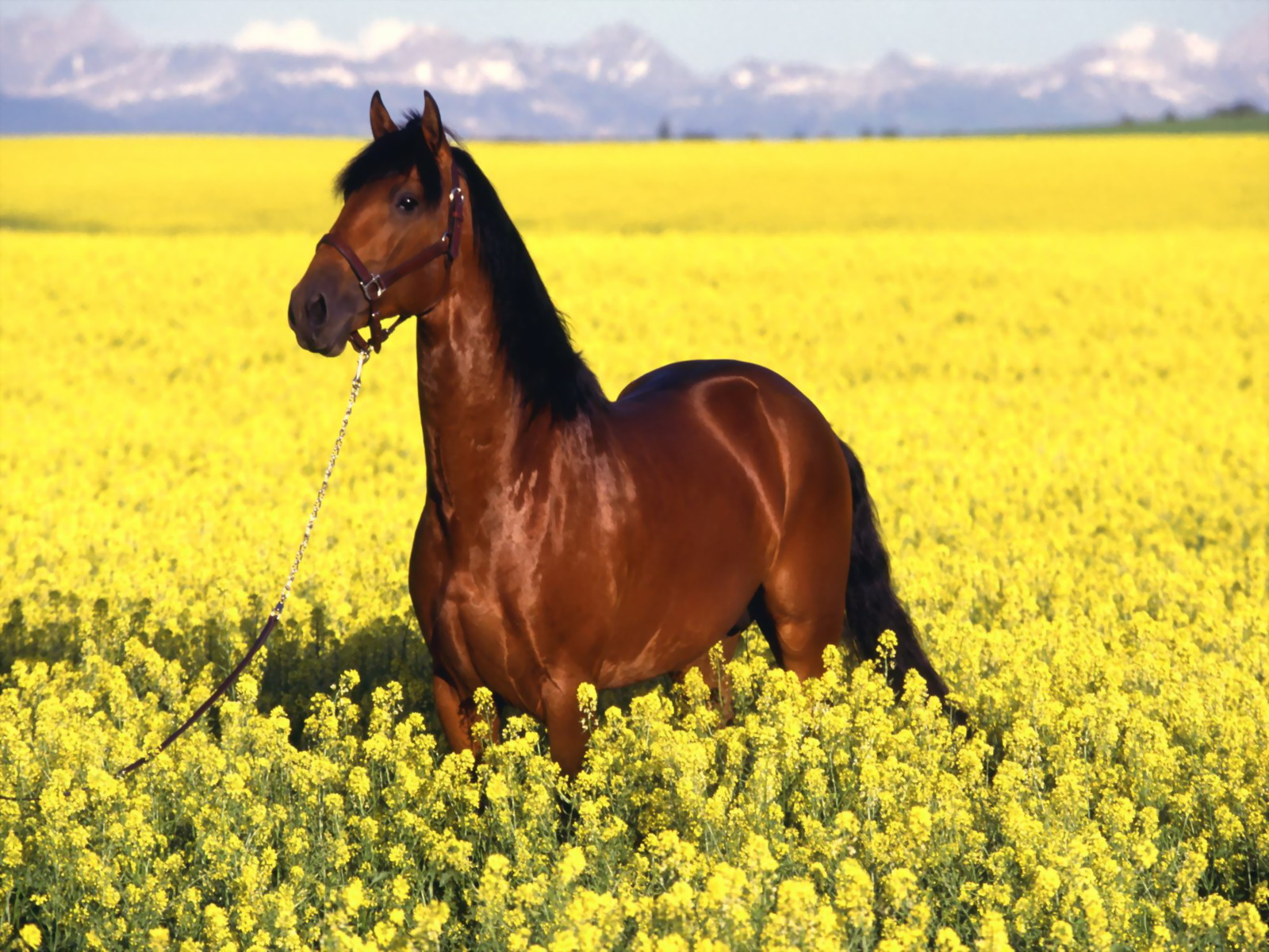beautiful horse in the world