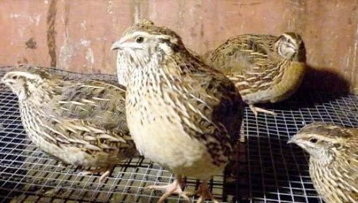 ide usaha peternakan hewan yang menguntungkan