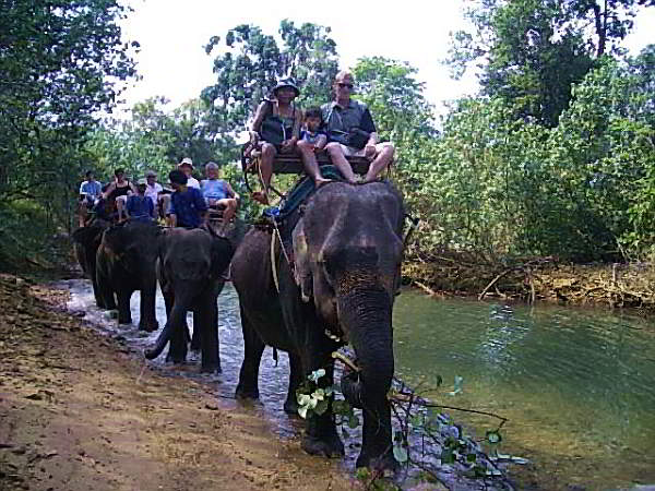 Elephant Trekking through the jungle