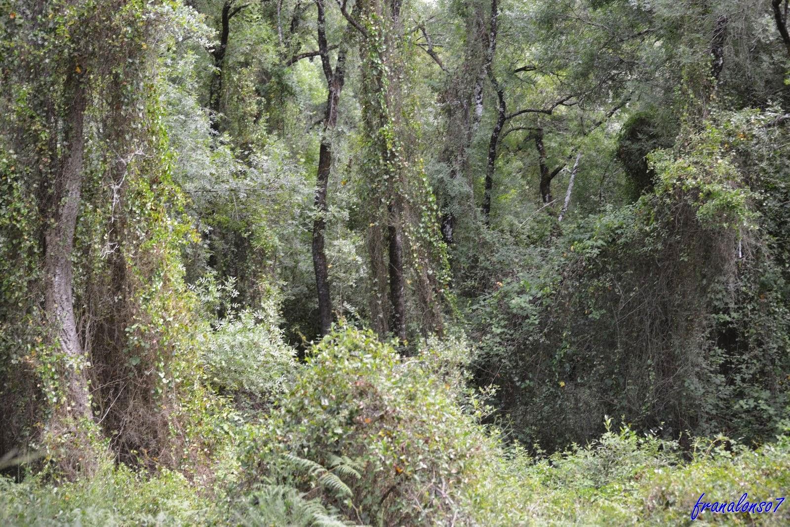 Paraje Natural Coto Doñana