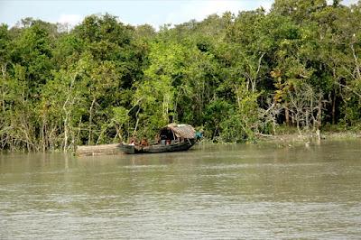 Teknaf Mangrove forest