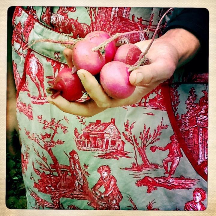 noble turnips