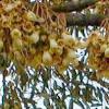 Nama Nama Bunga dalam Bahasa Sunda
