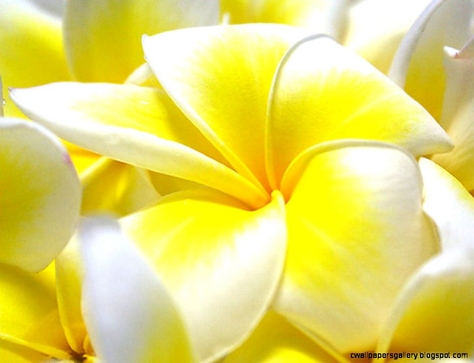 flowers wallpapers for desktop full size   Google Search  flowers