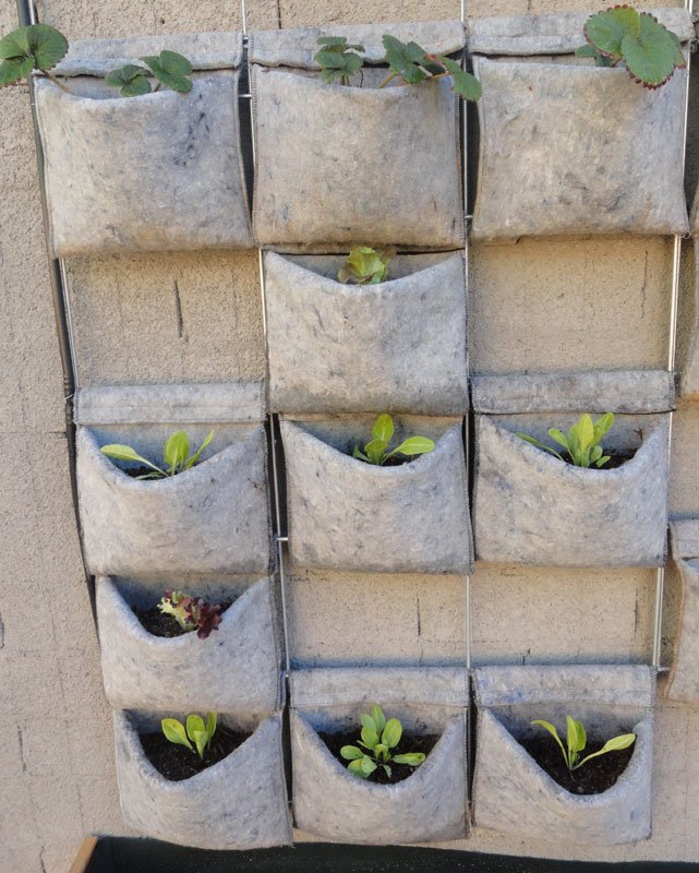 Vertiflor huerto urbano en casa for Jardin vertical de fieltro en formato kit
