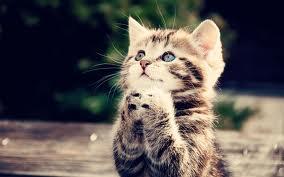 Oleh Gambar kucing lucu dan unik Imut imut Terbaru 2013 tersebut, aku ...