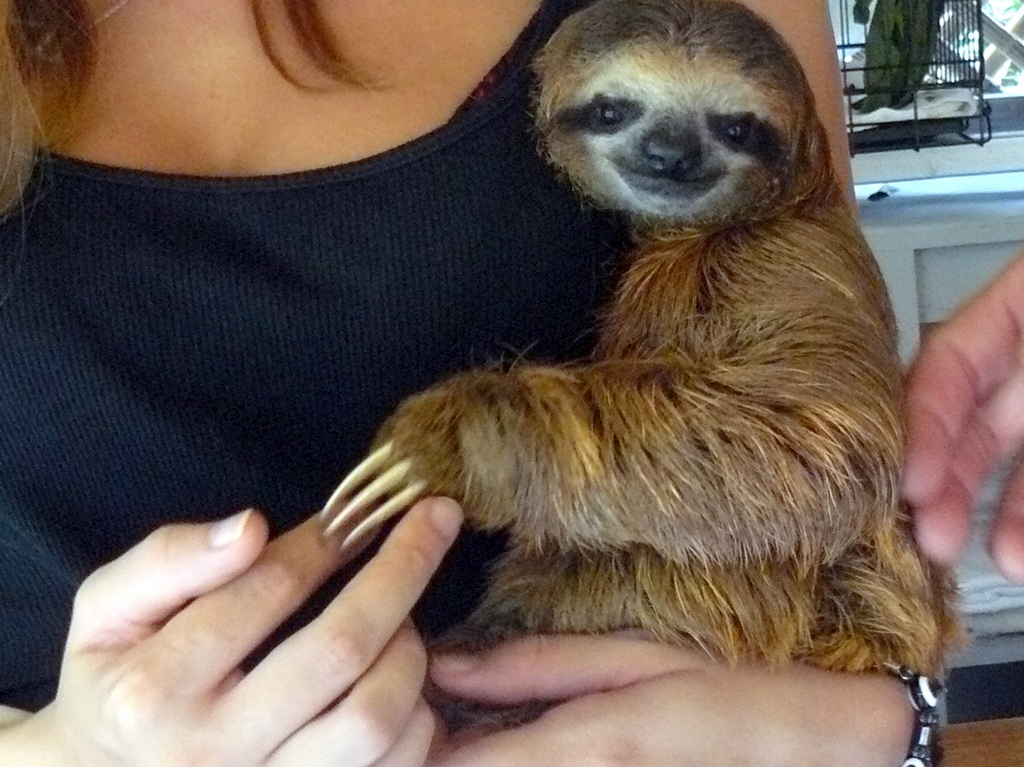 Sloth Smiling But ever smiling, sloth.