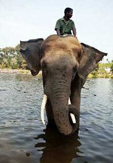 Coorg (Best Honeymoon Destinations In India) 4