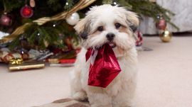 Wonderful Puppy Image