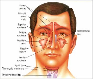 Sinus and homeopathy