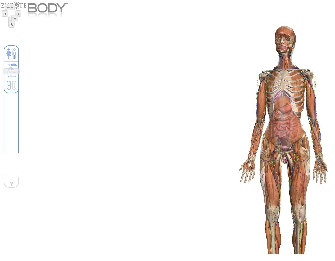 Cuerpo humano en 3D por capas. | Tecnología Actual