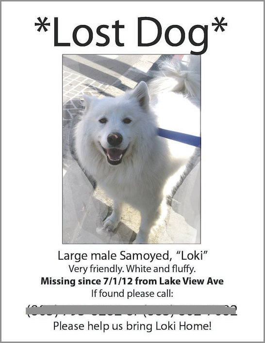 lost dog flyer template free .