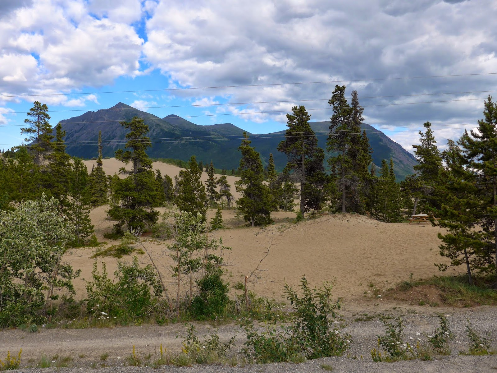 Carcross Desert - Not really a desert.