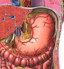 fungsi puasa stabilkan metabolisme tubuh supaya seimbang
