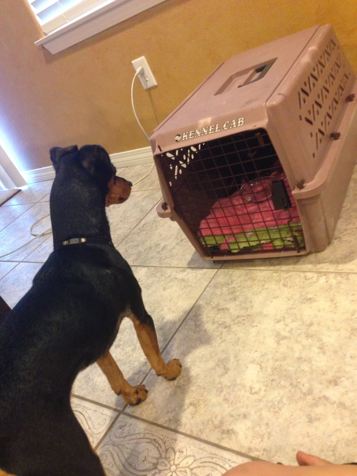 doxador puppy is sick with parvo anze the doxiepin dog