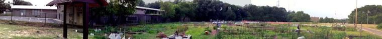 Mamie D. Lee Garden