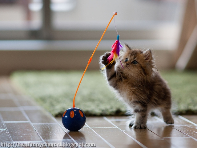 Kitten playing.