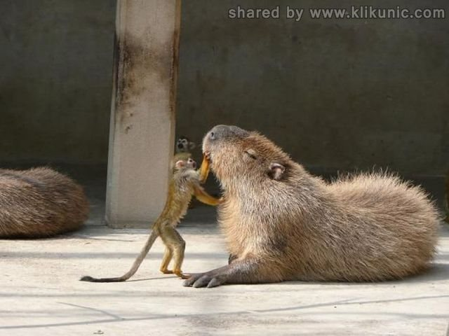 http://3.bp.blogspot.com/-GAxsizcuBZw/TXhNjDn4IyI/AAAAAAAAQjI/D8rKnZlCGBw/s1600/these_funny_animals_635_640_05.jpg