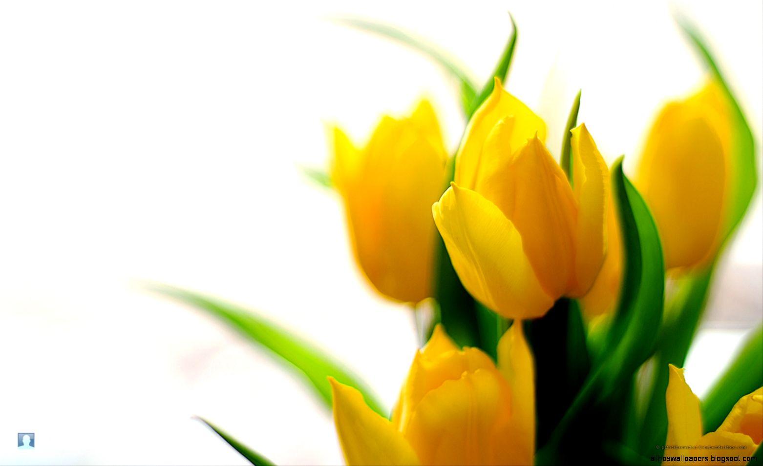 Free Flower Desktop Wallpaper Spring Flowers photos of Free Flower