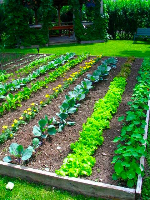 Backyard vegetable garden ideas for small yards
