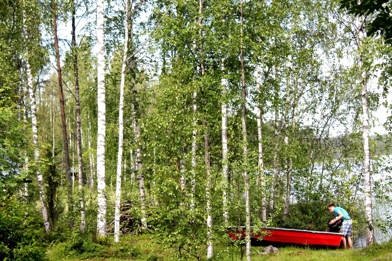 Finnish birches, woods by lake Saimaa, rowing a boat